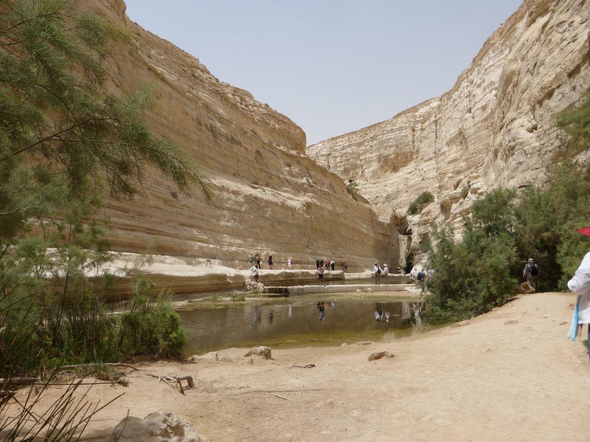 Canyon d'Ein Avdat