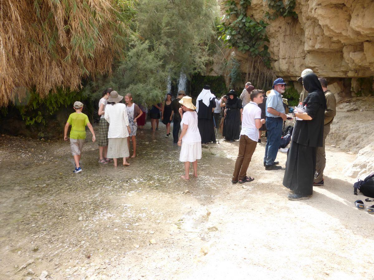 Bouquetin Oasis d'Ein Gedi