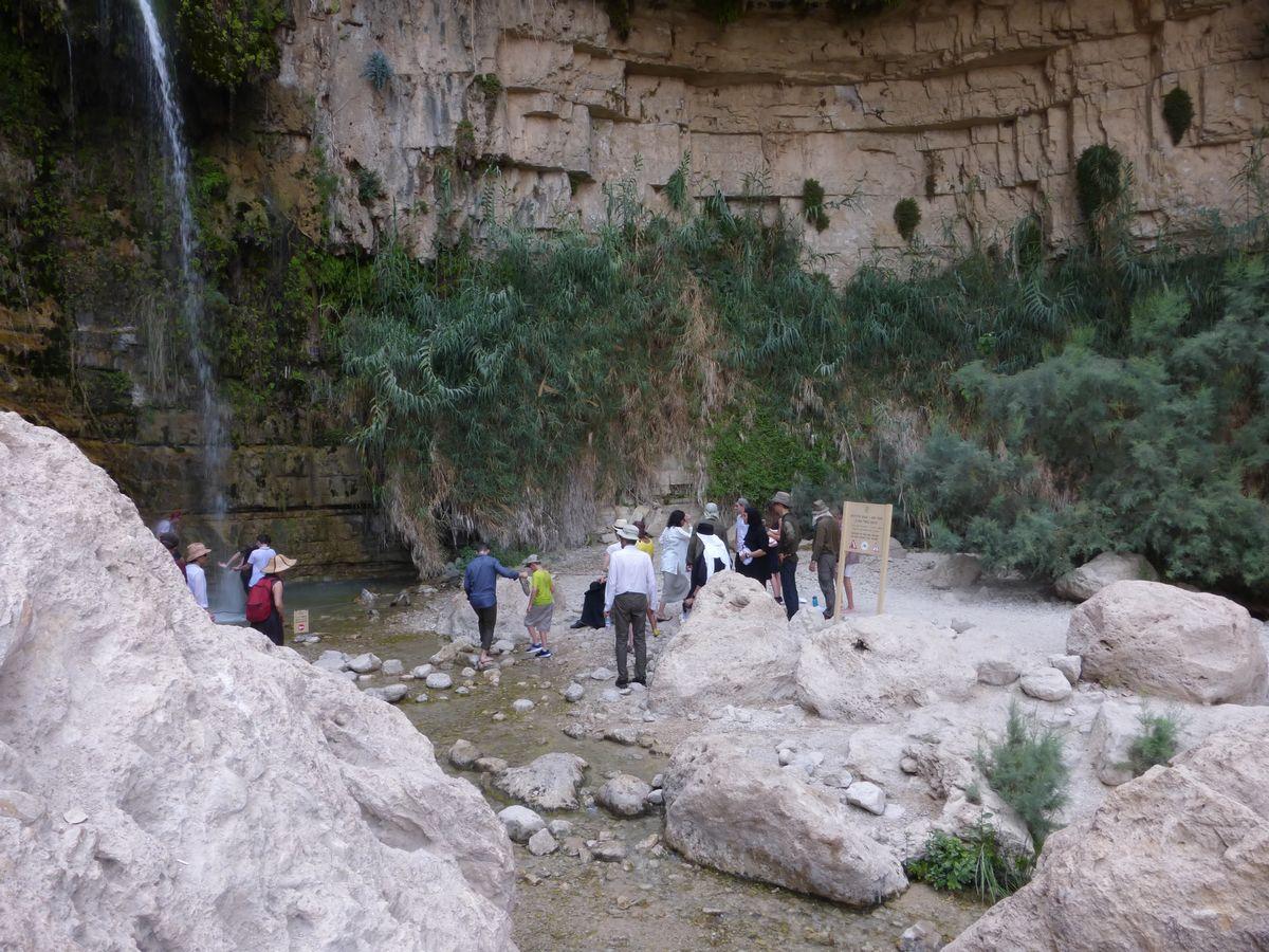Oasis d'Ein Gedi